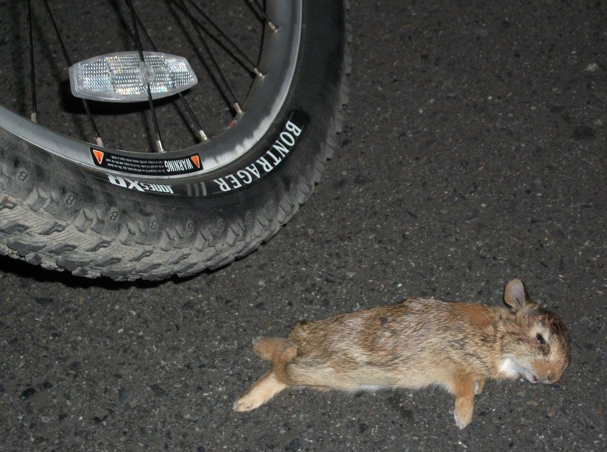 bikedeadbabyrabbitr.jpg