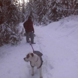 3850 feet dog sleigh to pull stuff to the cabin